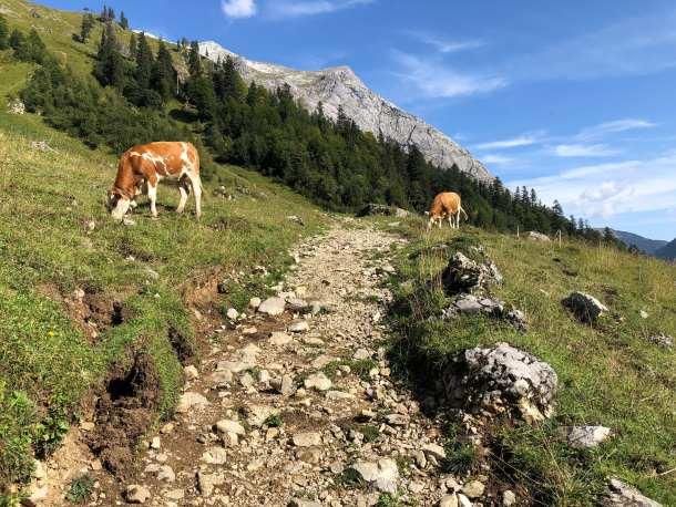 Alpbachtal ,Urlaub,Tourismus,Reise,News,