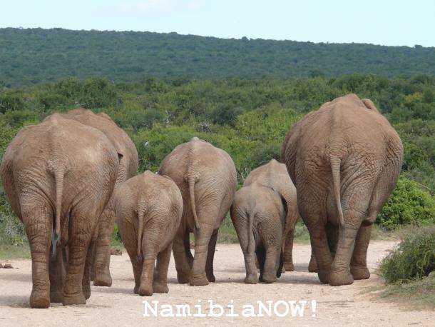 NamibiaNOW,Namibia,Urlaub,Tourismus,News,Reise,Reise_News