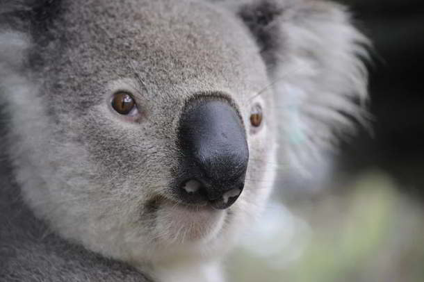 Australien,Reise,Tourismus,Urlaub