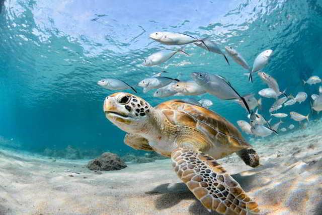 Korallenriffs,Thailand,Reise,News,Tourismus